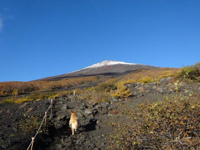 富士山 須走口 犬登山 2015-10-16 062