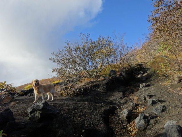富士山 須走口 犬登山 2015-10-16 070