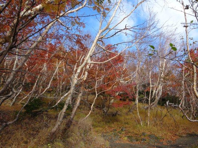富士山 須走口 犬登山 2015-10-16 072