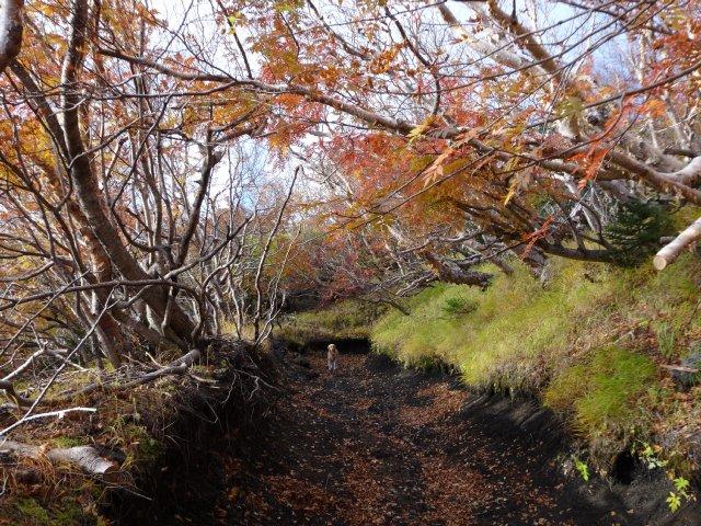 富士山 須走口 犬登山 2015-10-16 073