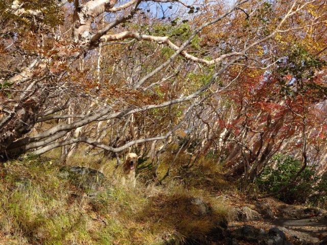 富士山 須走口 犬登山 2015-10-16 075