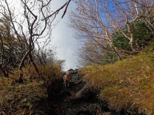 富士山 須走口 犬登山 2015-10-16 077