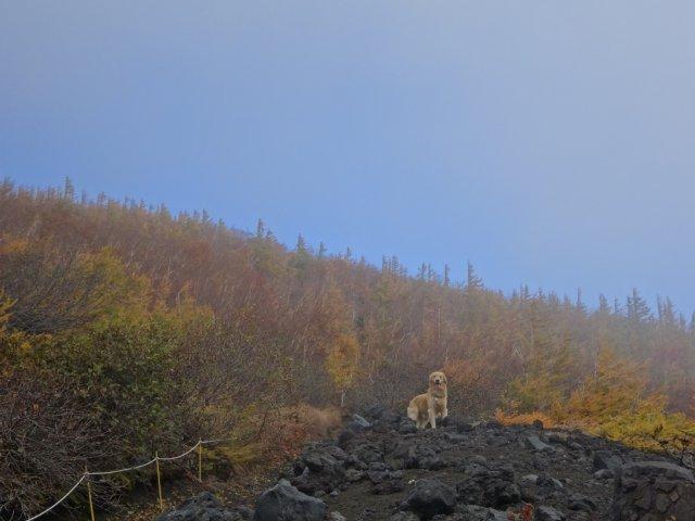 富士山 須走口 犬登山 2015-10-16 081