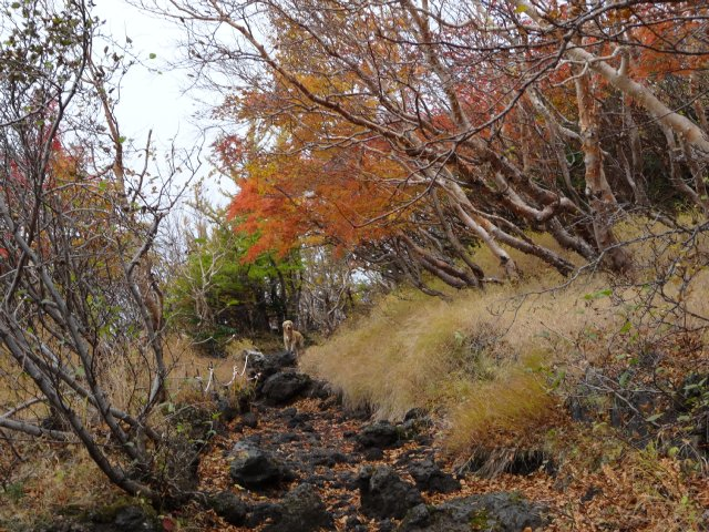 富士山 須走口 犬登山 2015-10-16 082