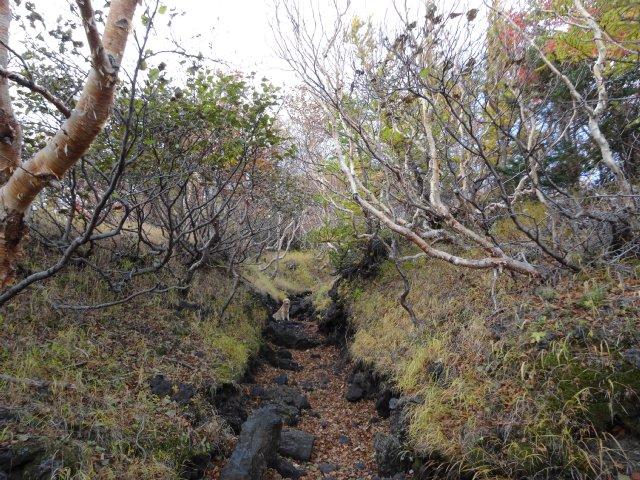 富士山 須走口 犬登山 2015-10-16 102
