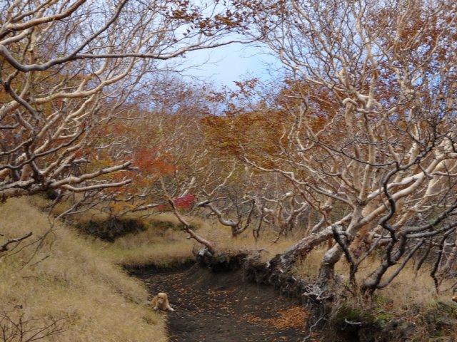 富士山 須走口 犬登山 2015-10-16 104
