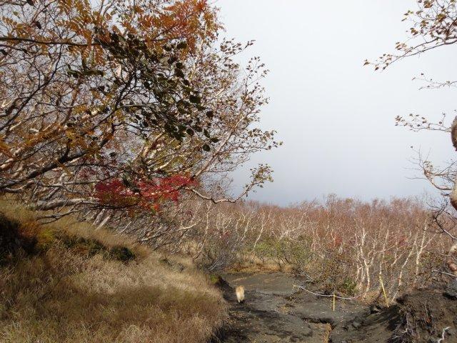 富士山 須走口 犬登山 2015-10-16 106