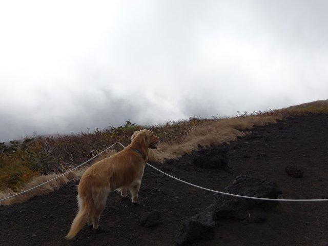 富士山 須走口 犬登山 2015-10-16 113