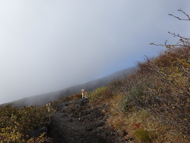 富士山 須走口 犬登山 2015-10-16 117