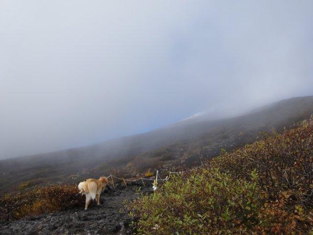 富士山 須走口 犬登山 2015-10-16 118