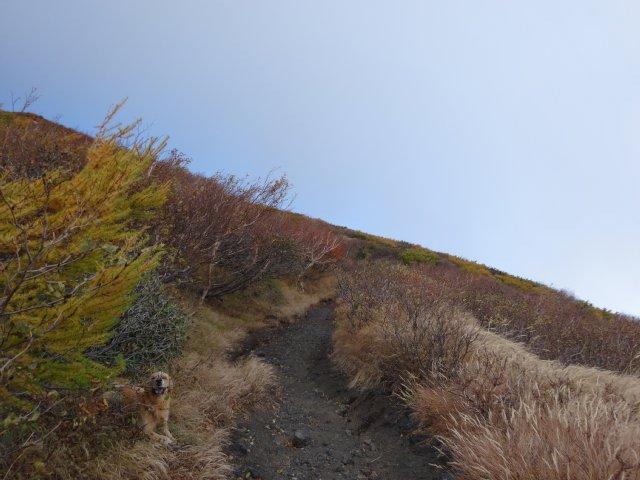 富士山 須走口 犬登山 2015-10-16 121