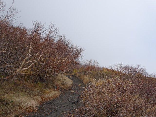 富士山 須走口 犬登山 2015-10-16 126