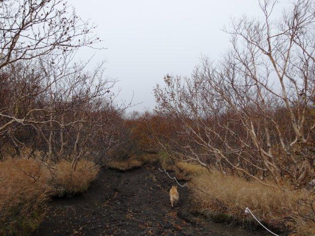 富士山 須走口 犬登山 2015-10-16 127