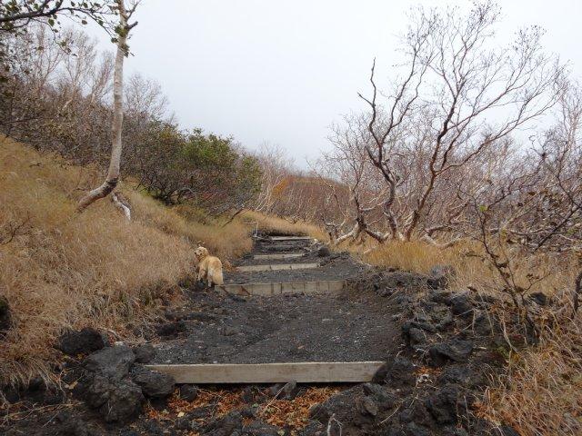 富士山 須走口 犬登山 2015-10-16 129
