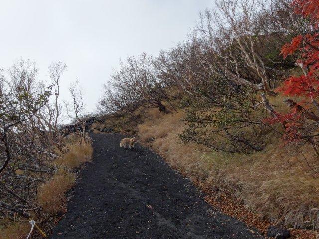 富士山 須走口 犬登山 2015-10-16 130
