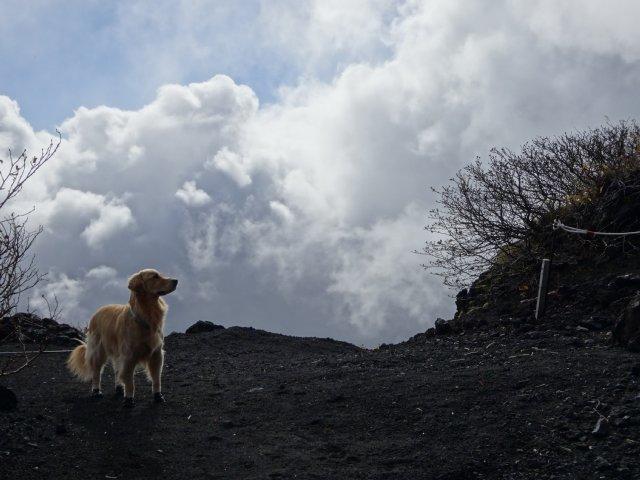 富士山 須走口 犬登山 2015-10-16 131