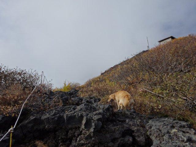 富士山 須走口 犬登山 2015-10-16 132