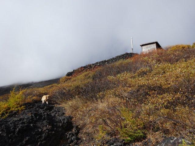 富士山 須走口 犬登山 2015-10-16 133