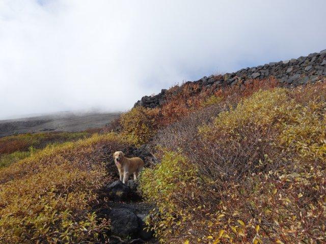 富士山 須走口 犬登山 2015-10-16 135