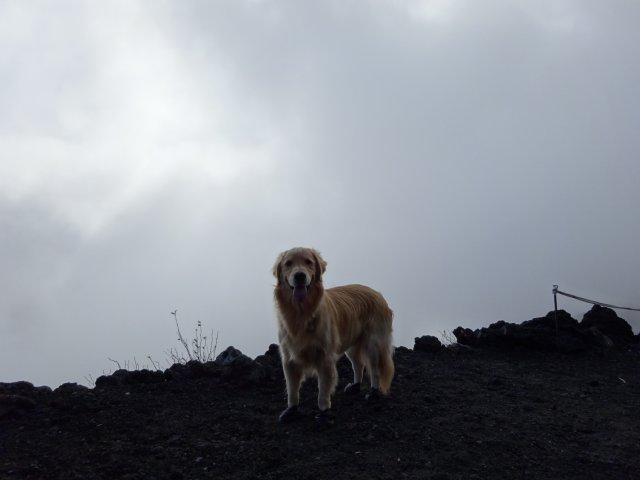 富士山 須走口 犬登山 2015-10-16 138