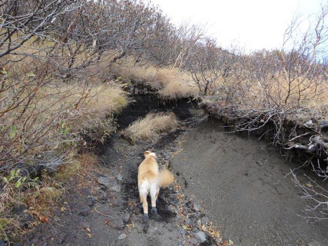 富士山 須走口 犬登山 2015-10-16 142