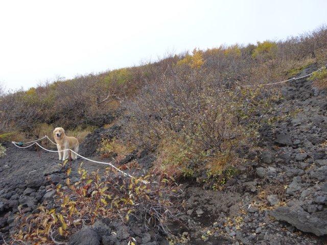 富士山 須走口 犬登山 2015-10-16 143