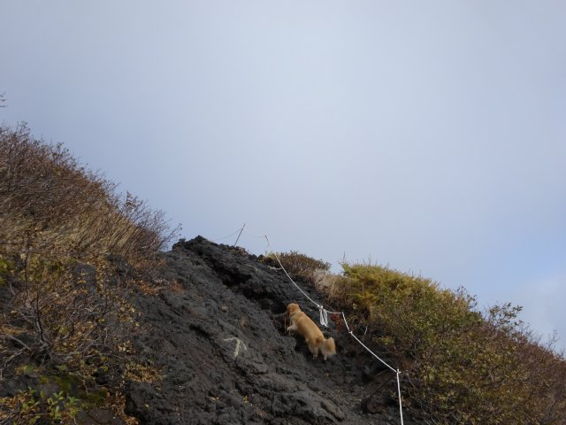 富士山 須走口 犬登山 2015-10-16 145