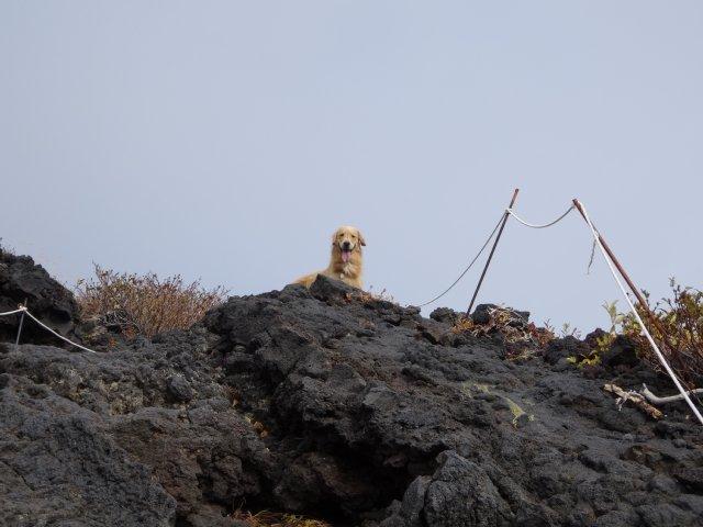 富士山 須走口 犬登山 2015-10-16 146