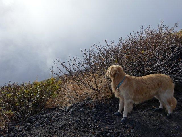 富士山 須走口 犬登山 2015-10-16 148