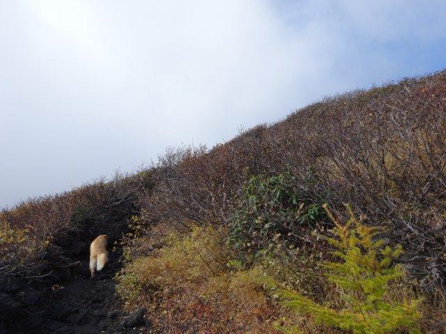 富士山 須走口 犬登山 2015-10-16 149