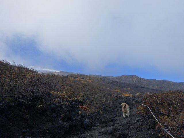 富士山 須走口 犬登山 2015-10-16 159