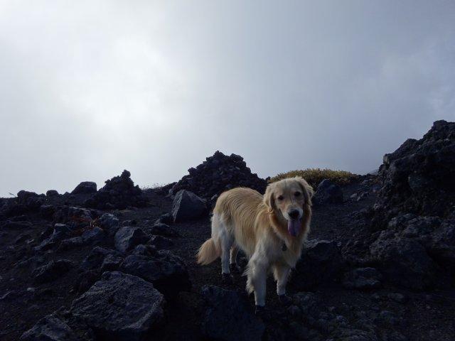 富士山 須走口 犬登山 2015-10-16 163