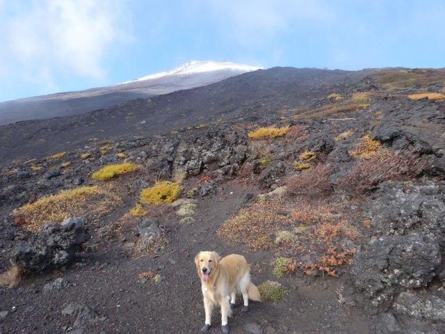 富士山 須走口 犬登山 2015-10-16 165