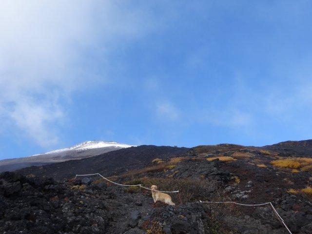 富士山 須走口 犬登山 2015-10-16 166