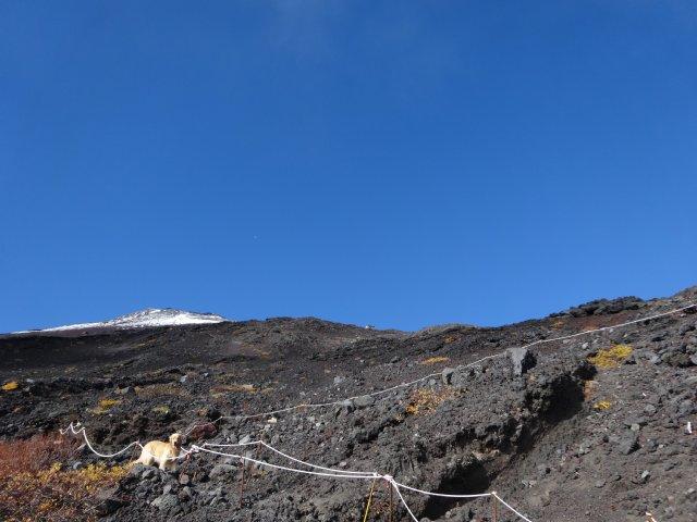 富士山 須走口 犬登山 2015-10-16 172