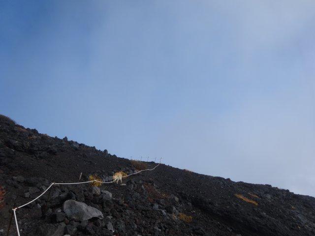 富士山 須走口 犬登山 2015-10-16 175