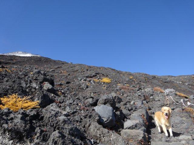 富士山 須走口 犬登山 2015-10-16 184
