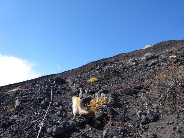富士山 須走口 犬登山 2015-10-16 186