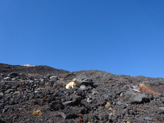 富士山 須走口 犬登山 2015-10-16 188