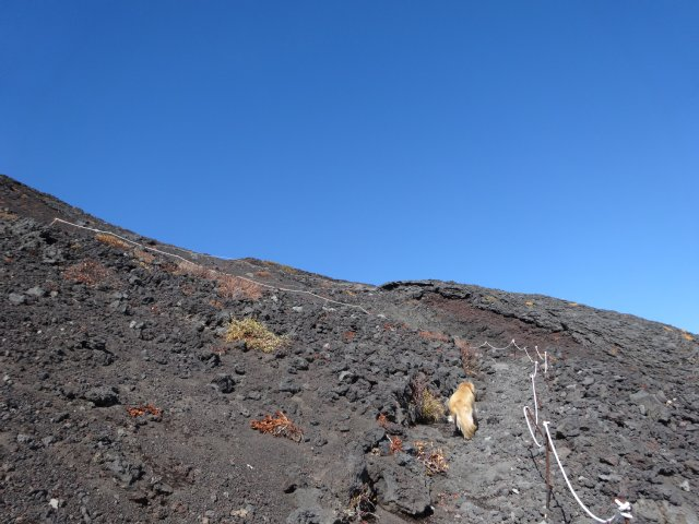 富士山 須走口 犬登山 2015-10-16 190