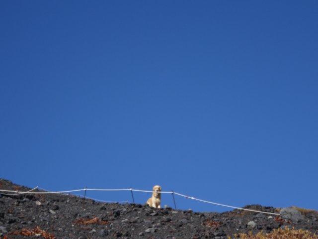 富士山 須走口 犬登山 2015-10-16 193