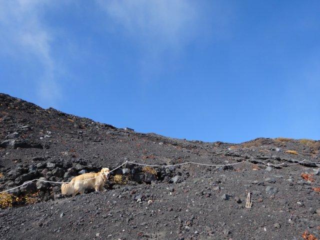富士山 須走口 犬登山 2015-10-16 194