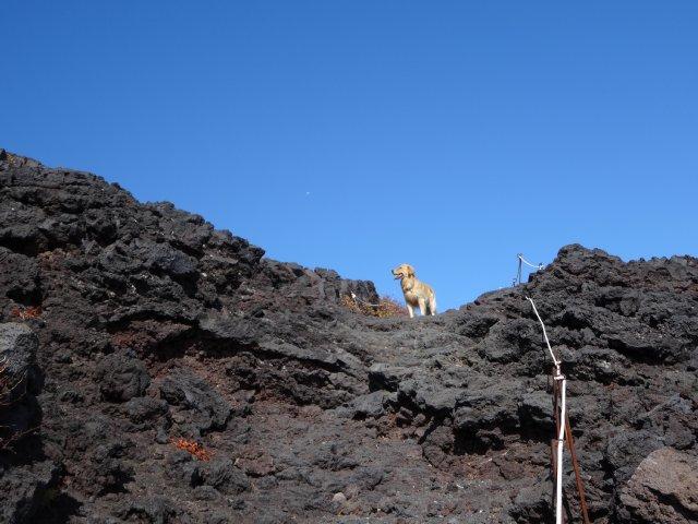 富士山 須走口 犬登山 2015-10-16 198