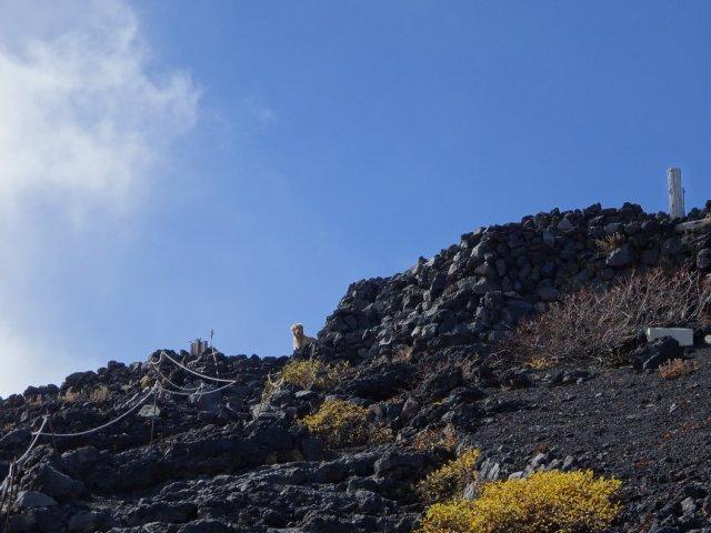 富士山 須走口 犬登山 2015-10-16 207