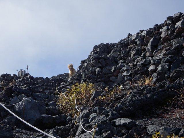 富士山 須走口 犬登山 2015-10-16 208