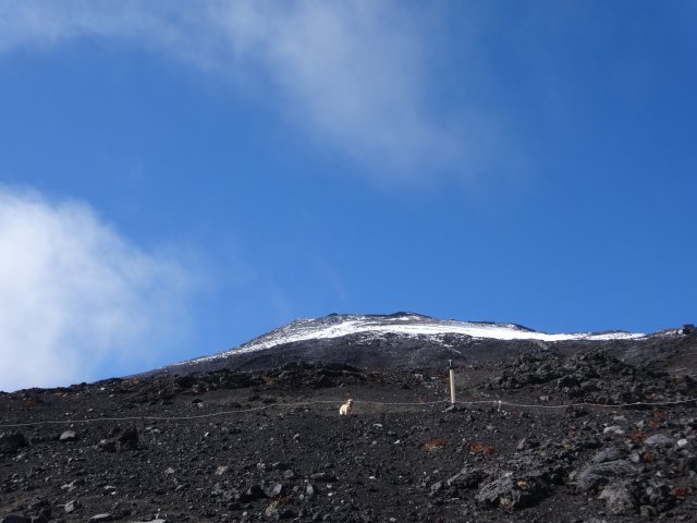 富士山 須走口 犬登山 2015-10-16 215