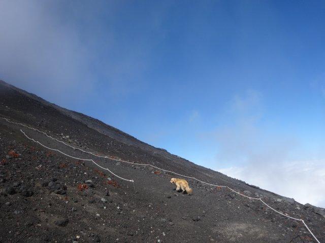 富士山 須走口 犬登山 2015-10-16 217