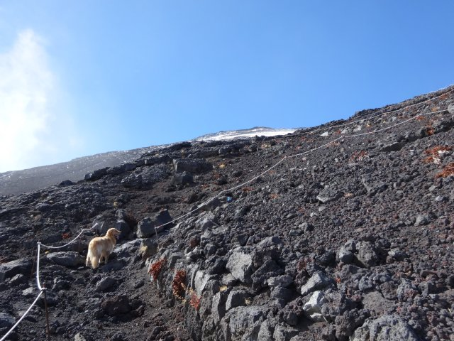 富士山 須走口 犬登山 2015-10-16 230