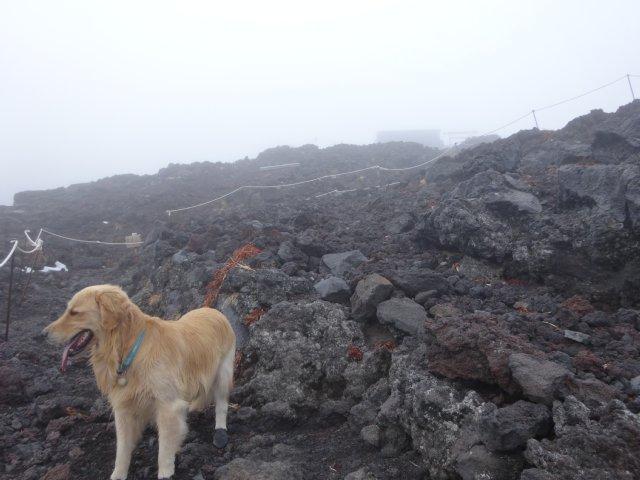 富士山 須走口 犬登山 2015-10-16 234