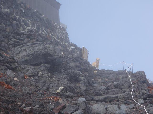 富士山 須走口 犬登山 2015-10-16 237